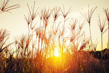Admirer la beauté de la nature avec le soleil couchant